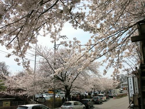 小諸の桜❤懐古園周辺散策_f0236260_19165896.jpg
