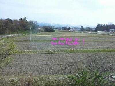 富山地鉄の花便り2013@チューリップと菜の花_a0243562_724056.jpg