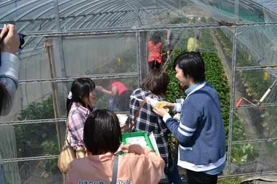 SHU-I 人生初のイチゴ狩りをファンと体験!_e0197970_14564066.jpg