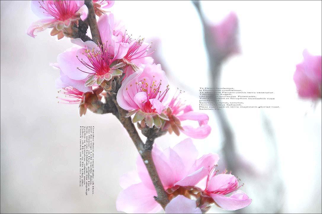 f0198771_0101026.jpg