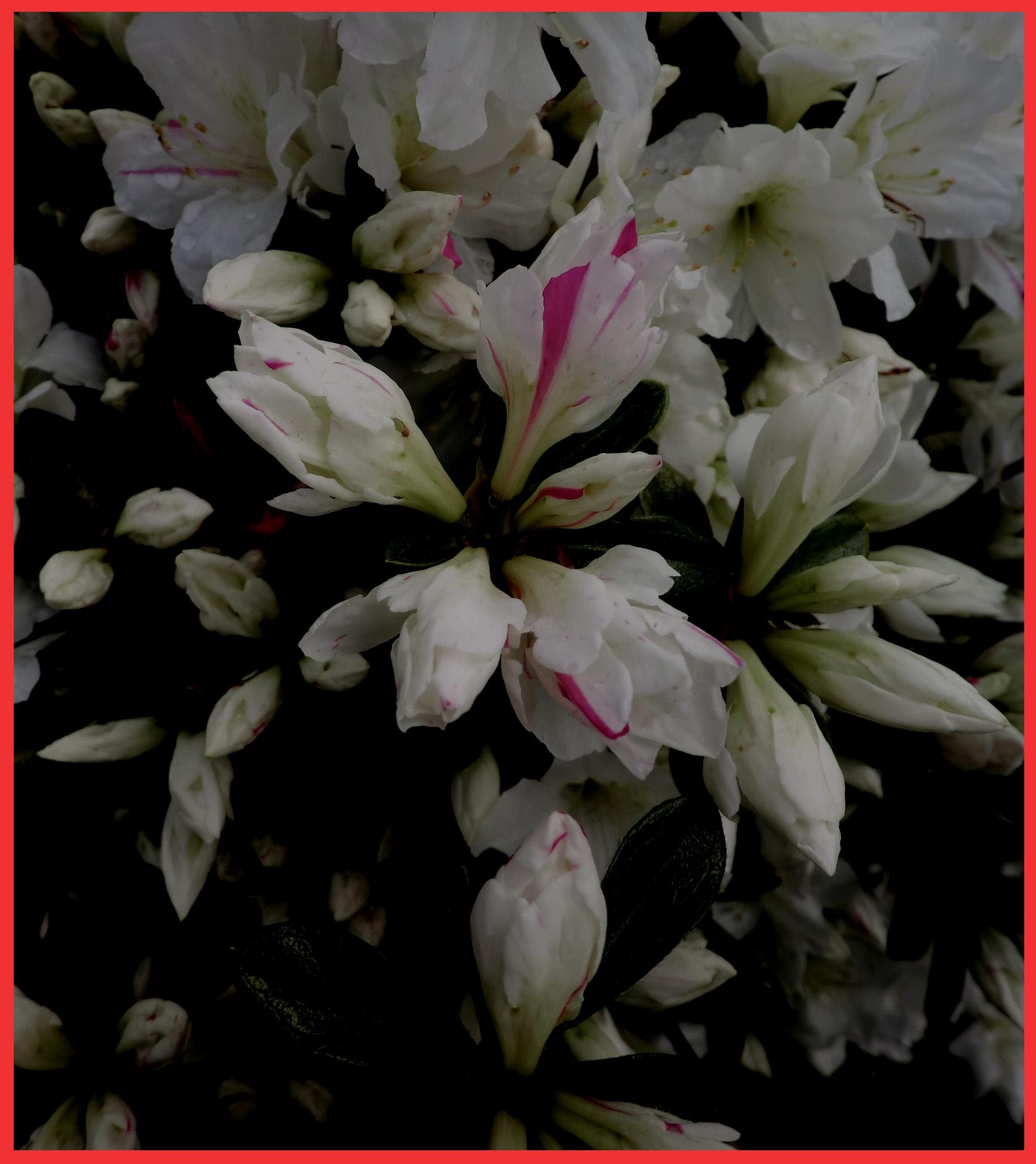 春の宵の、何故か胸騒ぎ。_e0236072_1050324.jpg