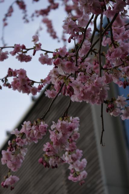 Thinking of Japan._d0256883_427187.jpg