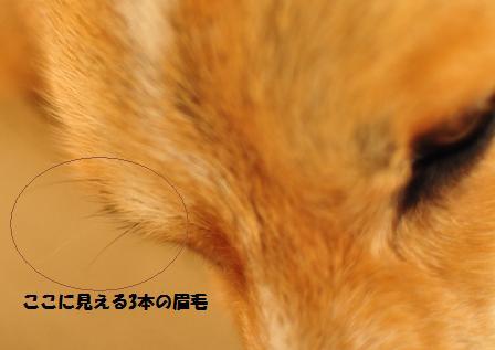 f0212597_16402096.jpg