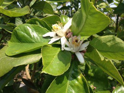 植物の成長_a0300410_12415249.jpg