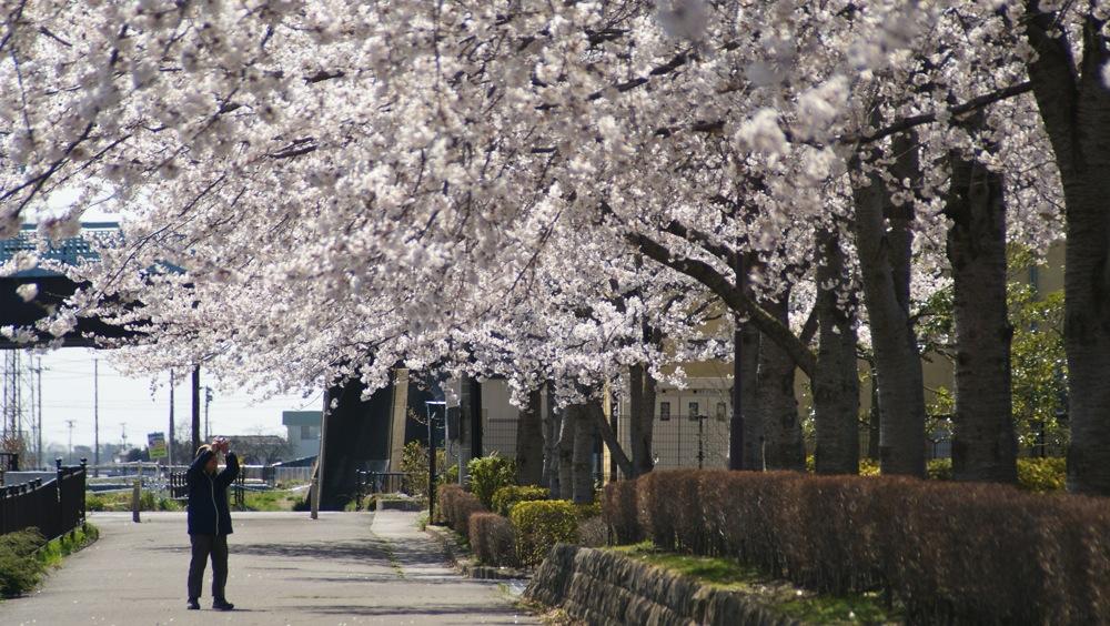 桜を撮るひと_d0001843_23144343.jpg