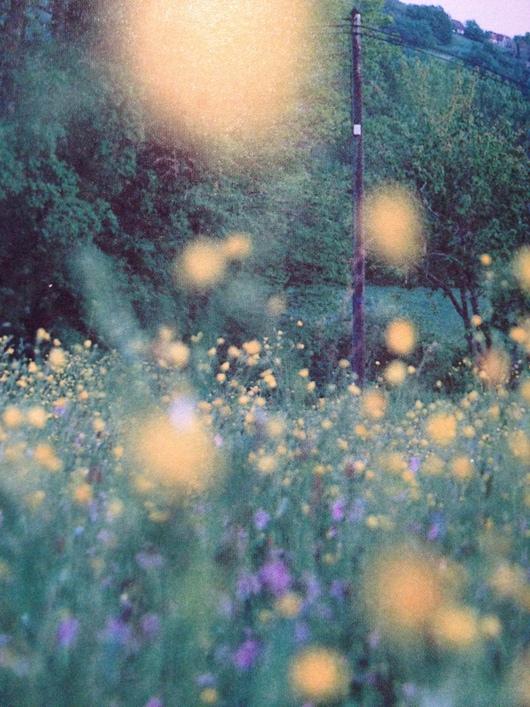 Spring Affair_a0267845_1443160.jpg