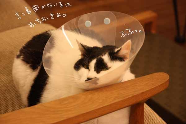 ぢぢこちゃんの・・・_b0223446_10275925.jpg