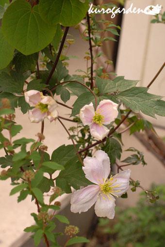 可愛い庭_e0119151_17275136.jpg