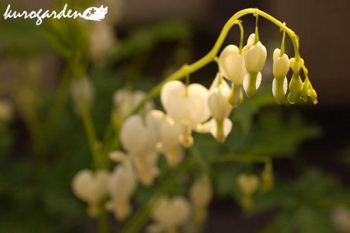 可愛い庭_e0119151_17275543.jpg
