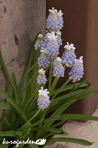 可愛い庭_e0119151_17281046.jpg