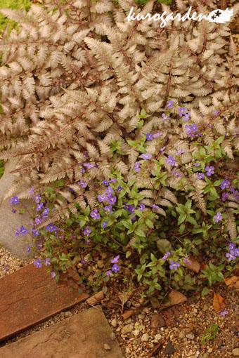 可愛い庭_e0119151_1728694.jpg