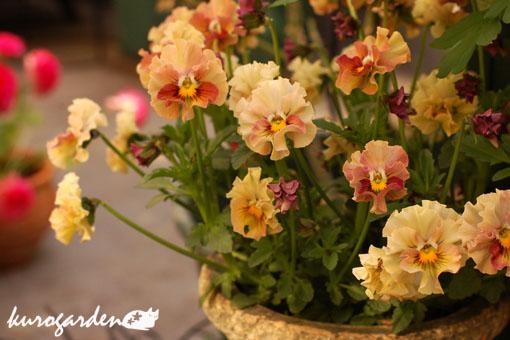 可愛い庭_e0119151_1728867.jpg