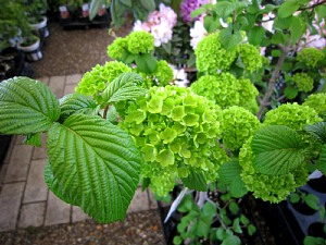 春の植木まつり_c0141652_919327.jpg