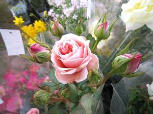 春の植木まつり_c0141652_9202464.jpg