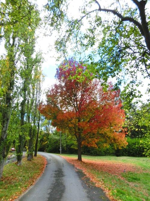アデレードも秋ですよ_f0234165_22344068.jpg