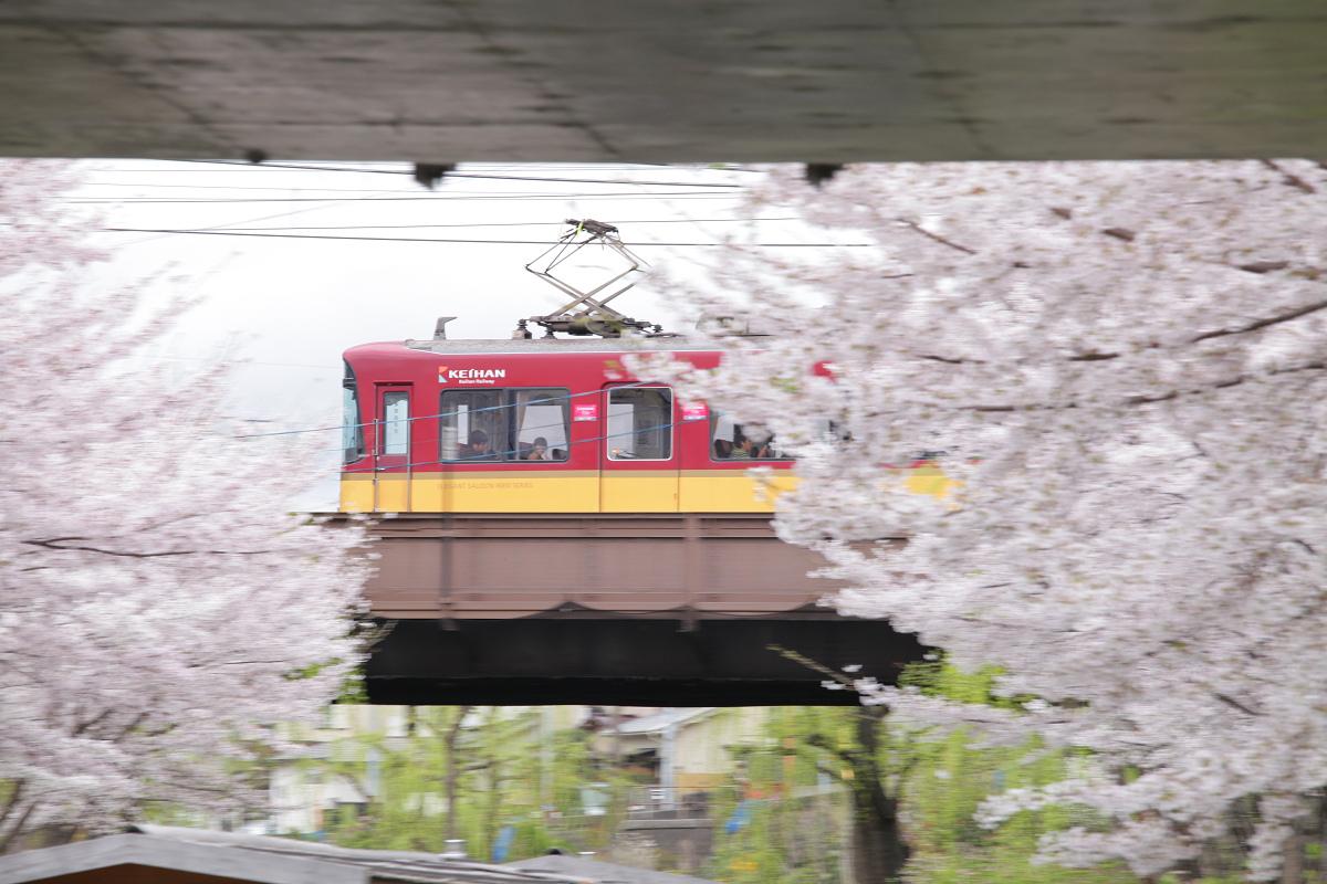桜 2013 <京都 伏見> _f0021869_22325547.jpg