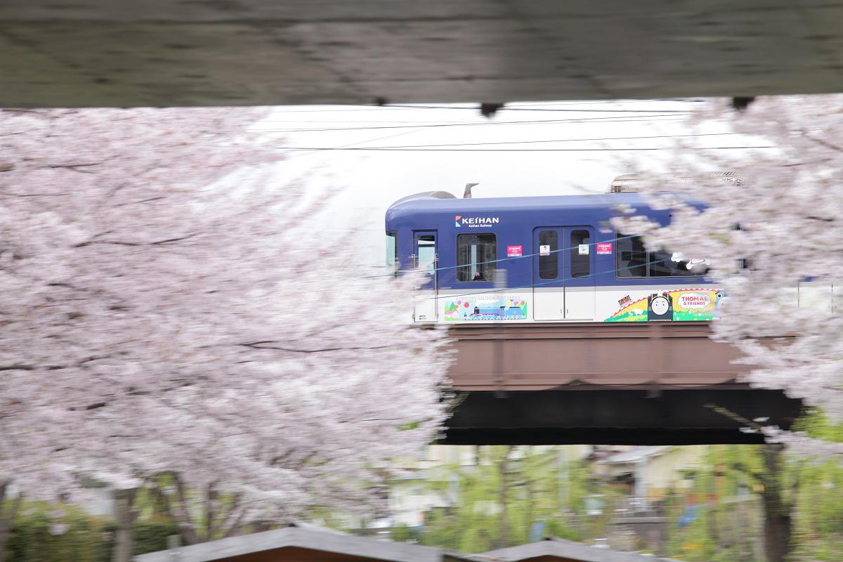 桜 2013 <京都 伏見> _f0021869_2232882.jpg