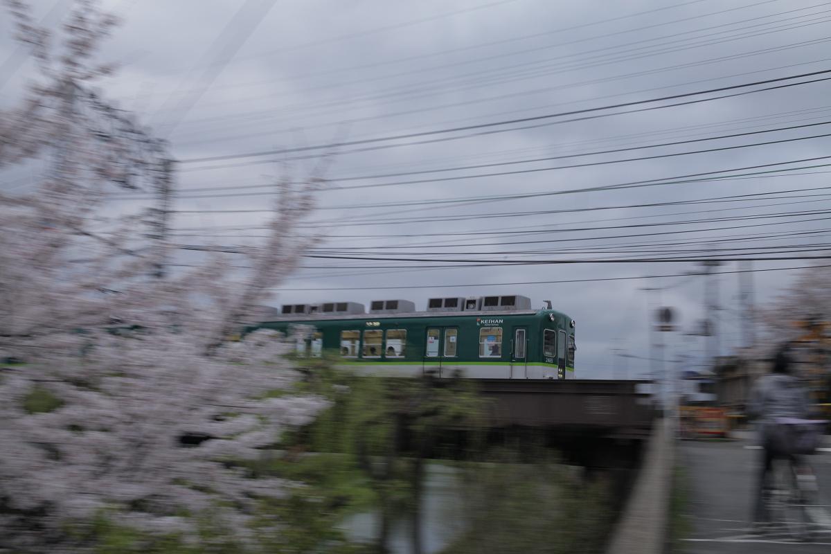 桜 2013 <京都 伏見> _f0021869_223512.jpg