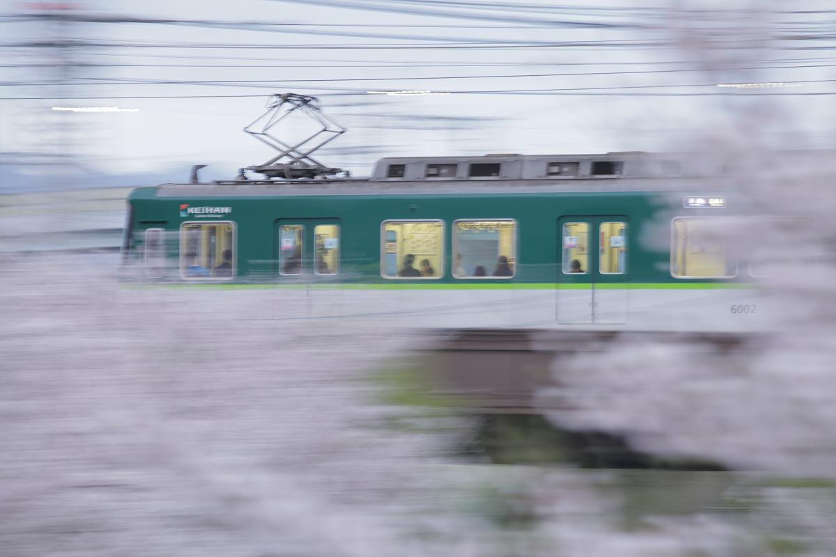 桜 2013 <京都 伏見> _f0021869_22373196.jpg