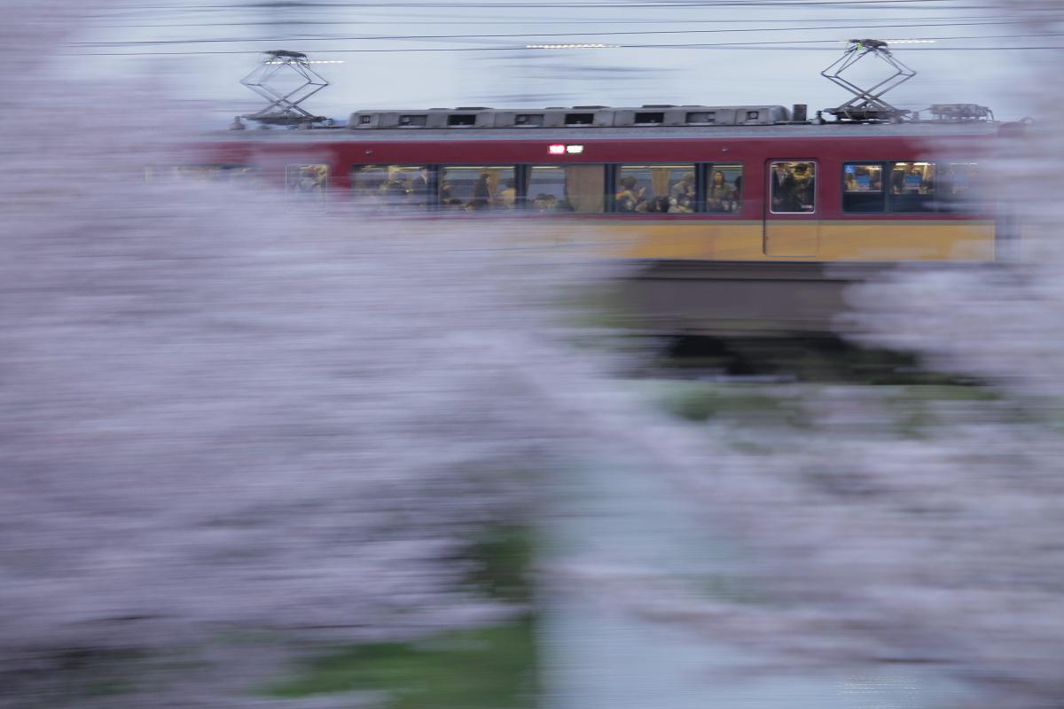 桜 2013 <京都 伏見> _f0021869_22373730.jpg