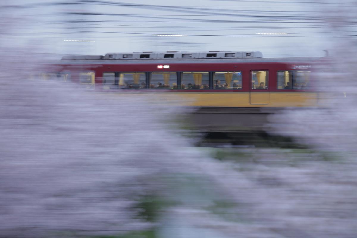 桜 2013 <京都 伏見> _f0021869_2239213.jpg