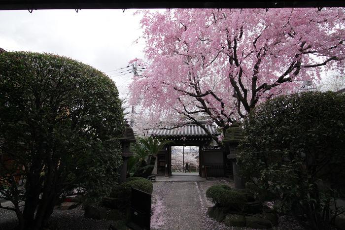 桜 2013 <京都 伏見>  _f0021869_22443386.jpg