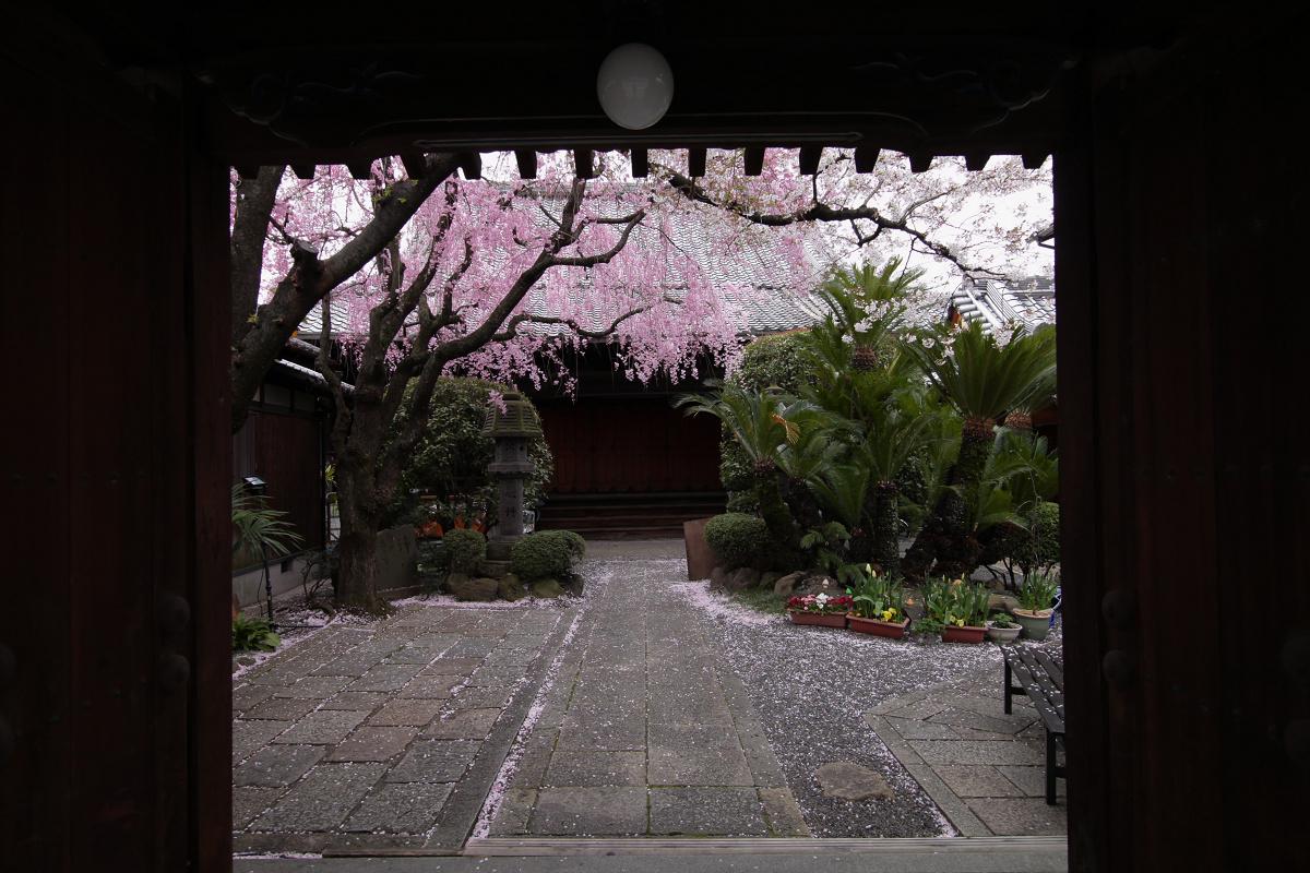 桜 2013 <京都 伏見>  _f0021869_22444646.jpg