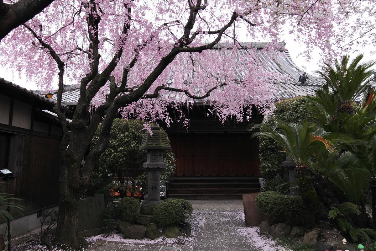 桜 2013 <京都 伏見>  _f0021869_22445434.jpg