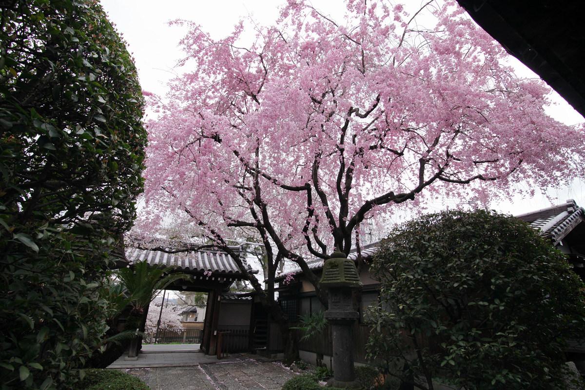 桜 2013 <京都 伏見>  _f0021869_2245263.jpg