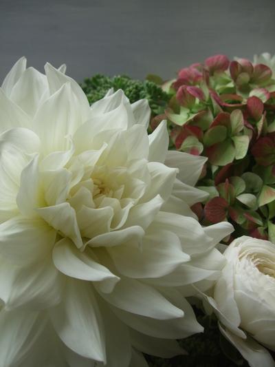オークリーフ(ダリア・ヘブンリーピースと紫陽花のアレンジメント)_f0049672_1554939.jpg
