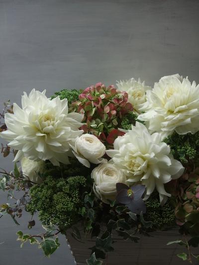オークリーフ(ダリア・ヘブンリーピースと紫陽花のアレンジメント)_f0049672_1562531.jpg