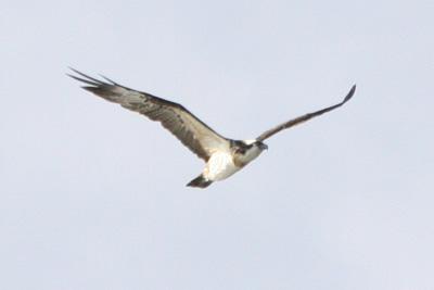 野鳥たち!2月分_b0084378_1655857.jpg