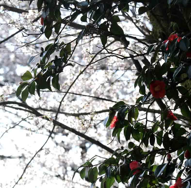 それぞれの桜景色_d0088788_0174723.jpg