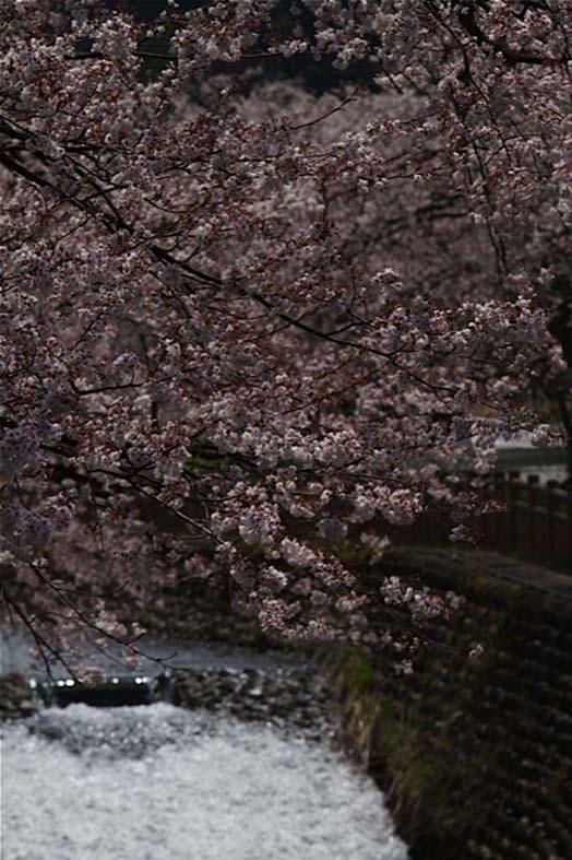 それぞれの桜景色_d0088788_0181214.jpg