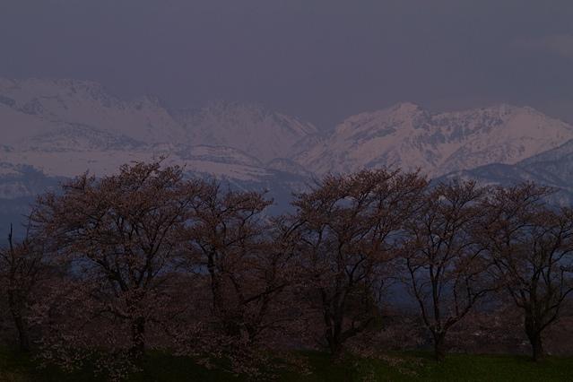 それぞれの桜景色_d0088788_0185541.jpg