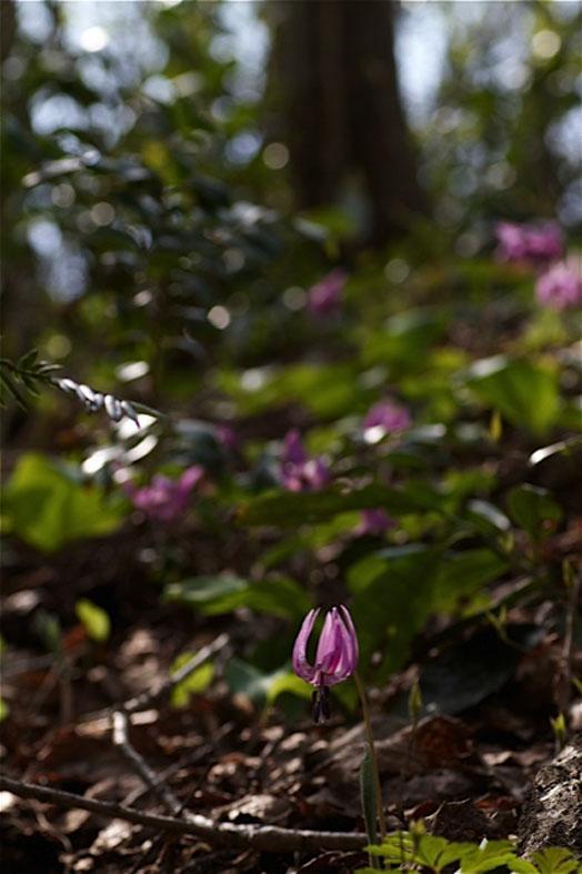 それぞれの桜景色_d0088788_0202523.jpg