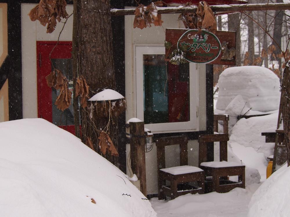 先週に引き続き悪天候のなか風雪に耐える「エゾフクロウ」発見!_f0276498_1310249.jpg
