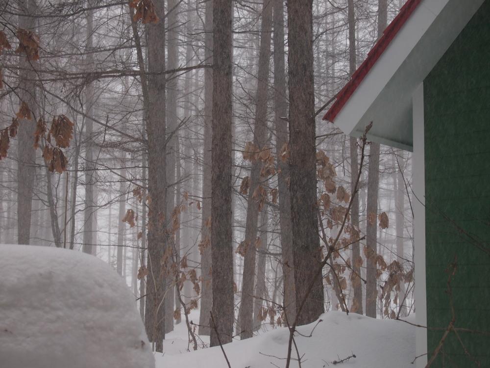 先週に引き続き悪天候のなか風雪に耐える「エゾフクロウ」発見!_f0276498_1385094.jpg