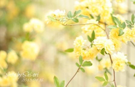 庭のお花たち*_a0169912_20554628.jpg