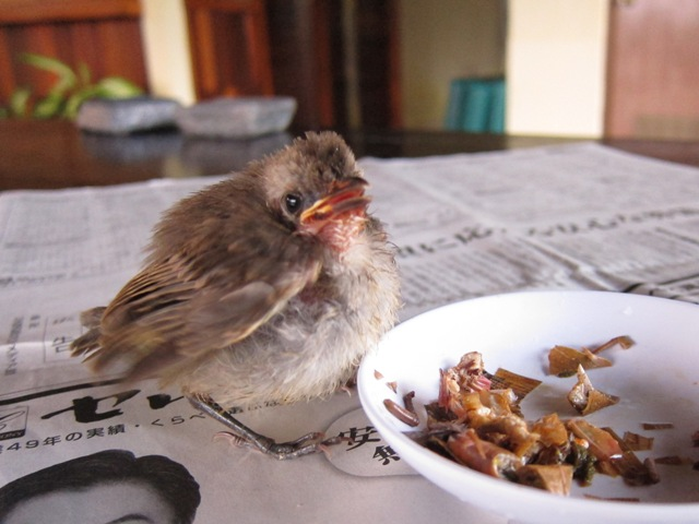 ガードマン付の鳥!?_c0211615_23103126.jpg