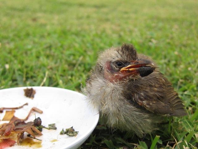 ガードマン付の鳥!?_c0211615_23134814.jpg
