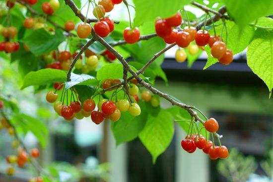 「mimosa Garden*Diary」のミモザガーデンさん登場!_c0039735_11501940.jpg