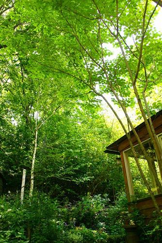 「mimosa Garden*Diary」のミモザガーデンさん登場!_c0039735_11561446.jpg