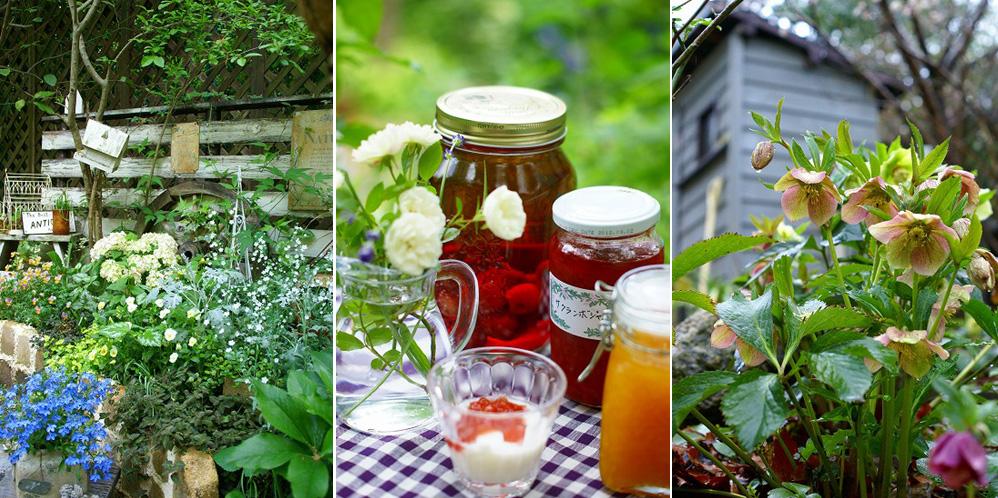 「mimosa Garden*Diary」のミモザガーデンさん登場!_c0039735_1418630.jpg