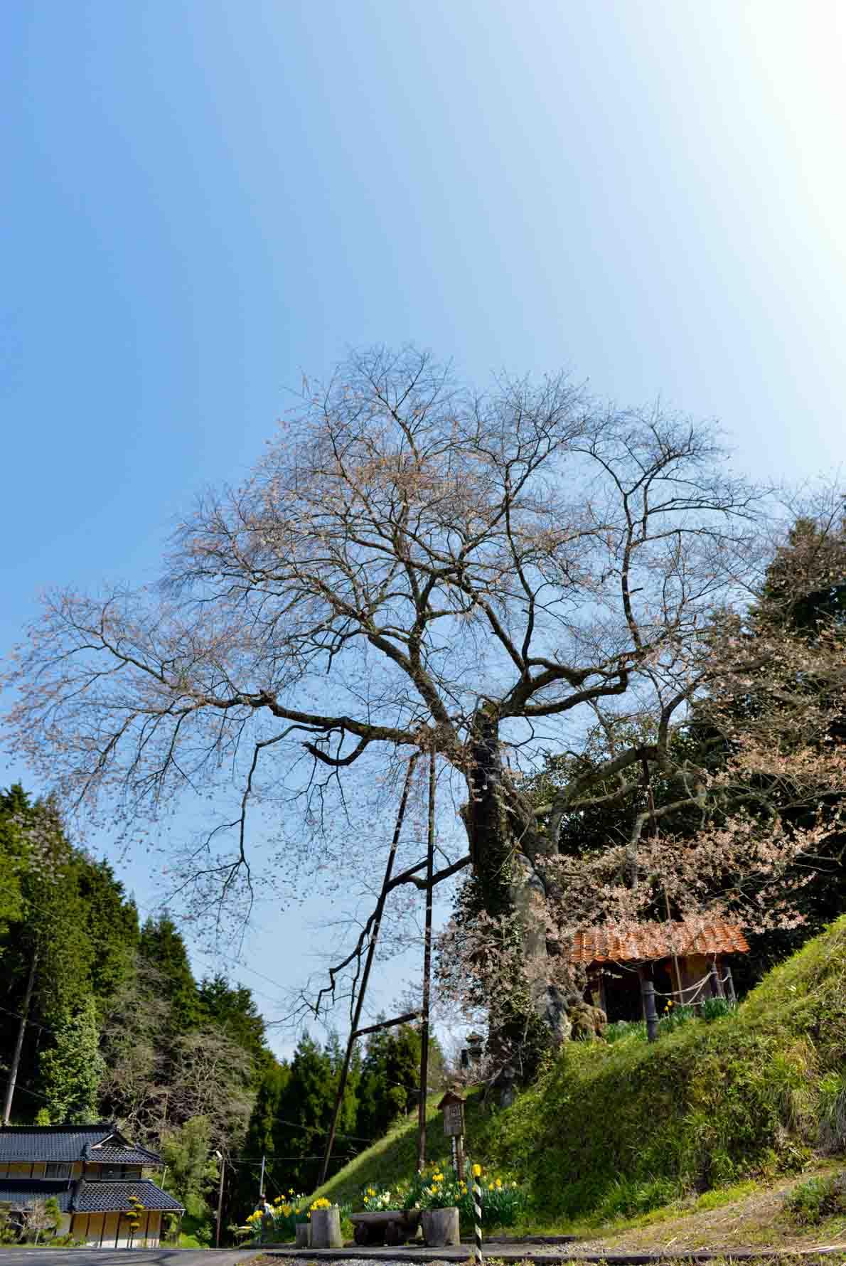 今年最後の 桜 を求めて ③_d0246136_164955.jpg