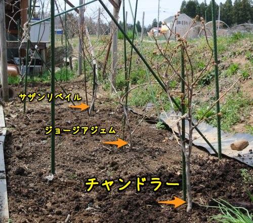 c0063348_2010965.jpg