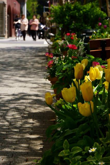 チューリップの咲く小径_a0257652_20533691.jpg
