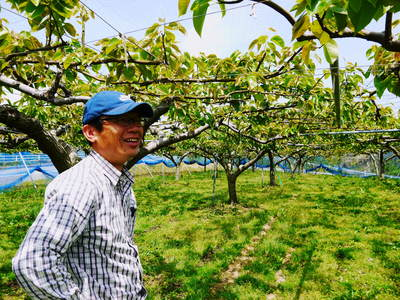 熊本梨 本藤果樹園 摘果作業の準備_a0254656_182815100.jpg