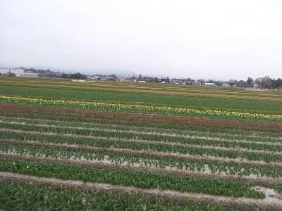 富山地鉄の花便り2013@チューリップと菜の花_a0243562_22545496.jpg