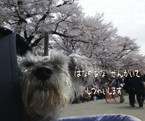 f0145575_1155941.jpg